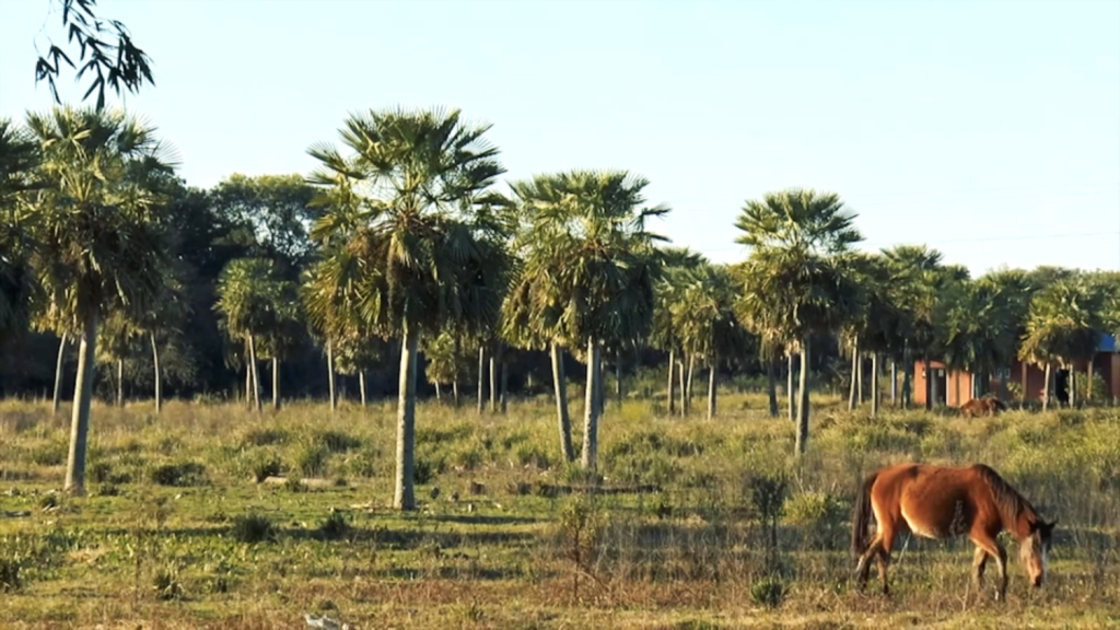They ask to recognize as a reserve the Caraguatá Forest, Argentina